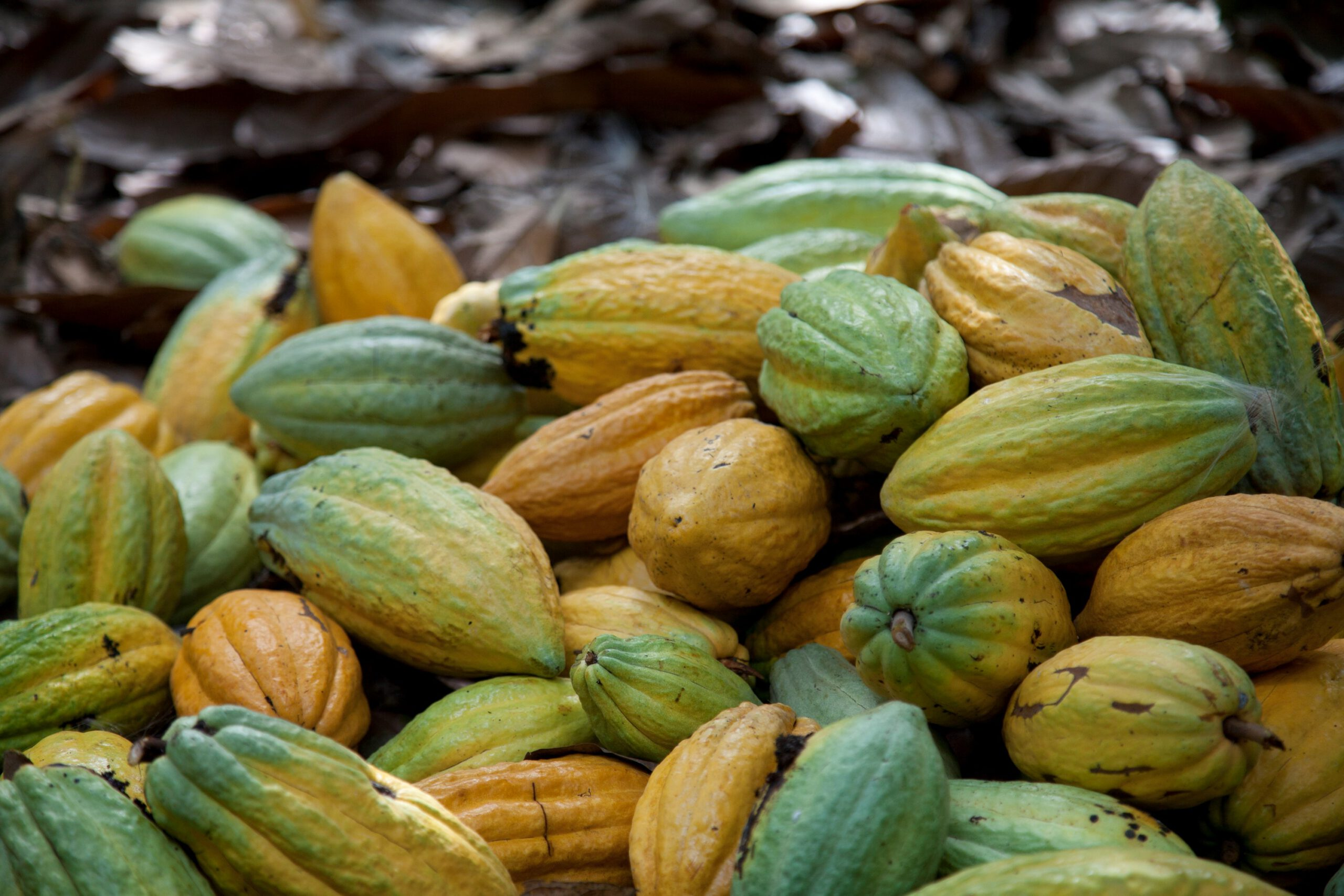 COVID- 19 RESPONSE: 5 things Ghana Cocoa Board (COCOBOD) can reinforce to sustain the Cocoa Sector