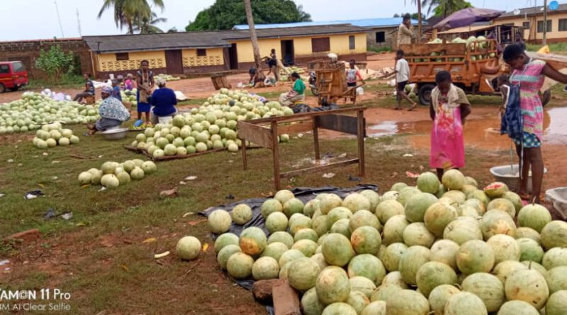 COVID-19, SNV, Vegetable, fruit, farmers