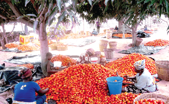 Tomatoes, watermelo, post harvest, phl, Emmanuel Wullo Wullingdool