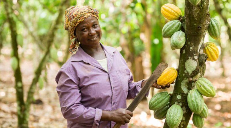 Asunafo, Fairtrade, Ghana