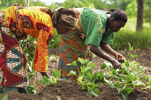 women farmers, report, Census, Ghana,