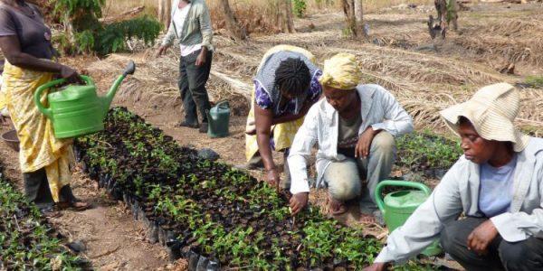 vegetable farmers, Ashanti region