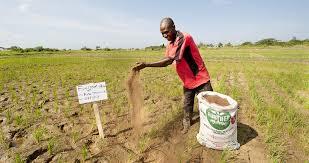 Fertiliser shortage, PFJ, planting, agriculture