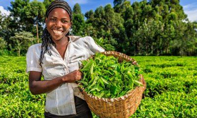 African, UN, food summit